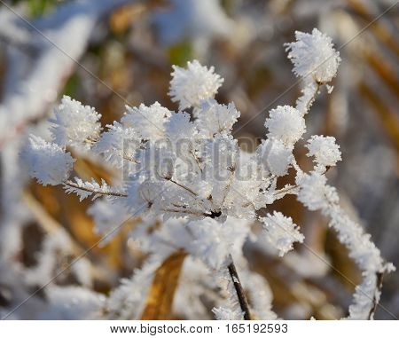 plants covered with frost southern Bohemia . Czech Republic