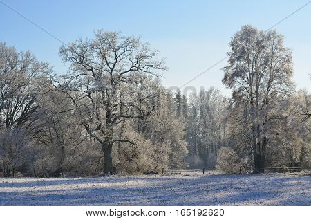 view of a winter forest Southern Bohemia Czech Republic