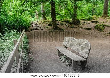 Wooden bench, carved from tree trunks, is placed in a clearing in the forest.