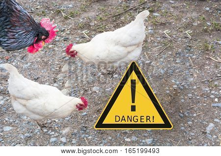 Symbolically general prevention against infections. On the picture warning sign with inscription in english danger and chickens. Concept of avian flu animal experiments antibiotics and vaccinations.