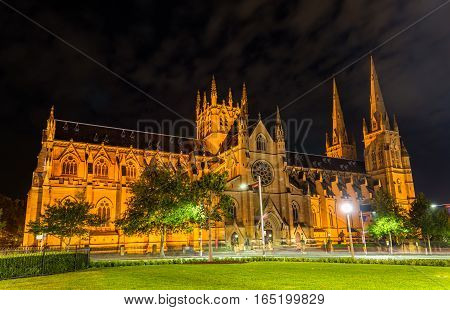 St Mary's Cathedral in Sydney at night - Australia, New South Wales