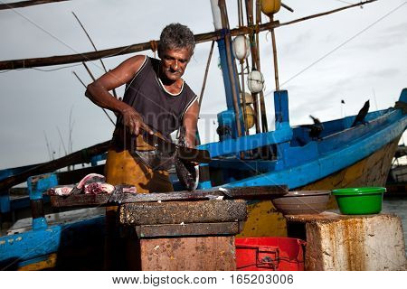 The man at the fish market in Sri Lanka cut up the fish