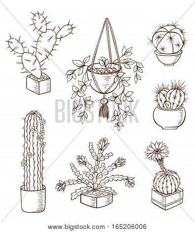 Set of various houseplants on a white background. Hand drawn vector illustration.