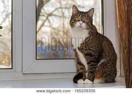 Grey striped cat sitting on the window sill