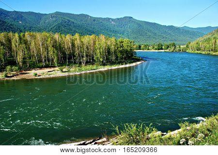 Forest river Kucherla Altai Russia wild landscape