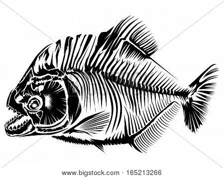 Piranha Isolated On White