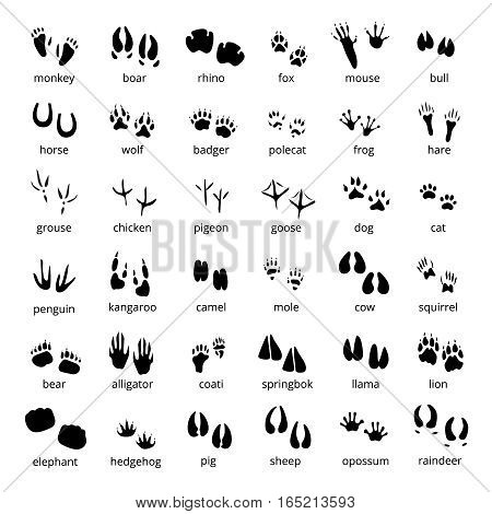 Big monochrome set of different animals and birds silhouette tracks with description isolated on white background flat vector illustration