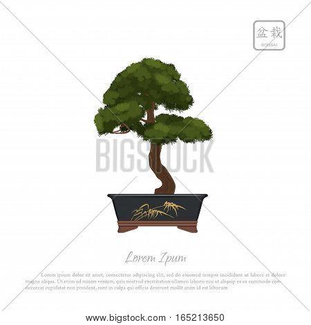 Bonsai tree in pot on white background. Vector illustration