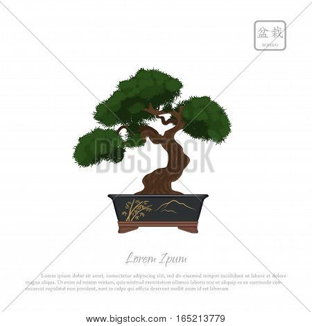 Bonsai tree in pot on white background. Vector illustration