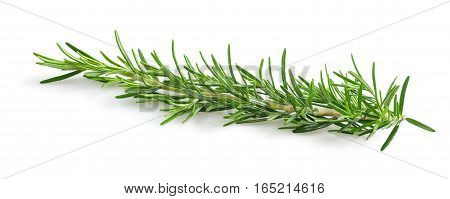 rosemary sprig isolated on a white background
