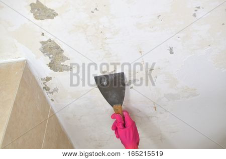 Hand in pink glove holding a plaster spatula peeling a ceiling preparing it for smoothing