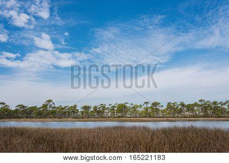 Brown Grass in Masch under Blue Cloudy Sky along the Florida gulf coast