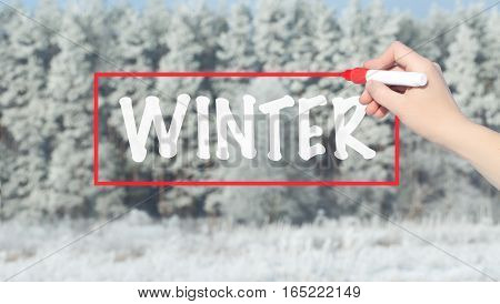 Woman Hand Writing Winter With Marker Over Snowy Forest.