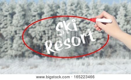 Woman Hand Writing Ski Resort With Marker Over Winter Forest.