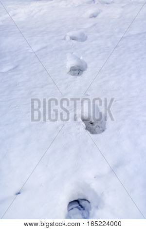 Footprints in the snow. Isolated footprints after snowing day.