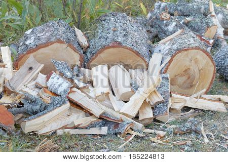 A pile of chopped birch log on the grass