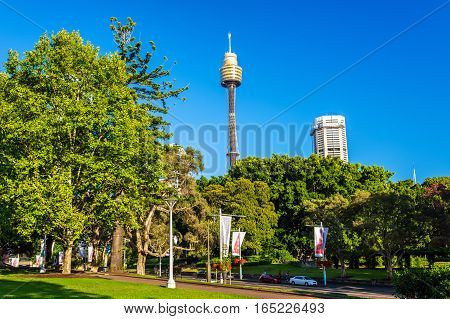 Hyde Park with modern building in the background in Sydney - Australia