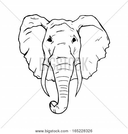Elephant isolated on white. Nature african elephant large vector illustration strong huge zoo. Safari africa portrait strength animal head symbol. Ethnic icon wild mammal.