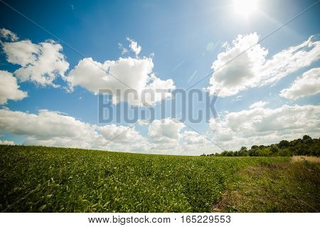 Agricultural field. beautiful spring landscape. agricultural plants