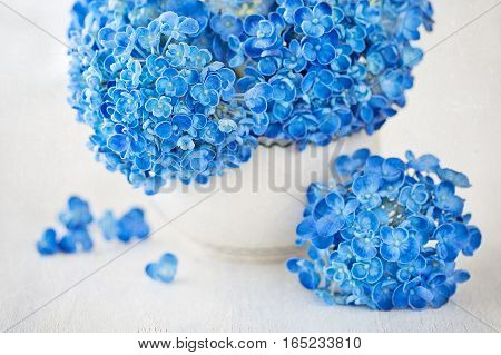 beautiful blue hydrangea flowers in a vase. vintage style ,grunge paper background.