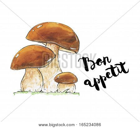 Hand Drawn Watercolor Mushrooms Boletus Edulis Penny Bun Cep Porcino Porcini With Handwritten Words
