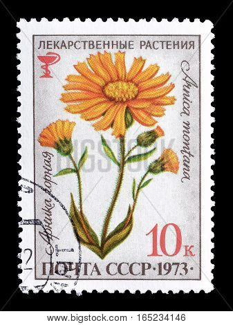 SOVIET UNION - CIRCA 1973 : Cancelled postage stamp printed by Soviet Union, that shows Medical plant.