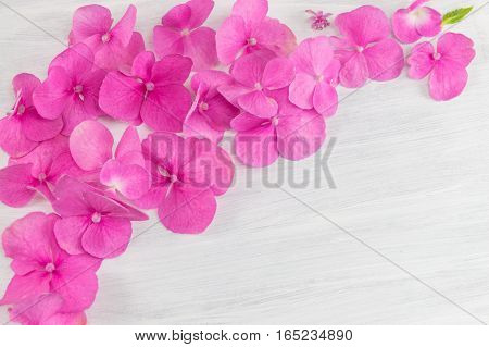 Bunch Of Hortensia Pink Flowers