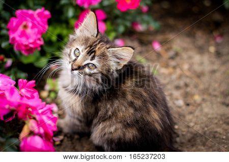 kitten and flower, kitten walks, kitty, kitten and pink flowers