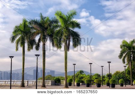 Palm trees and light posts lining a sidewalk in the city of Macao china on a blue sky day.