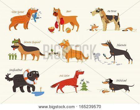 Dog breeds. Cocker Spaniel, Collie, Newfoundland, Doberman, Fox Terrier, Irish Setter, Dachshund, Boxer, German Shepherd. Funny cartoon character. Vector illustration Isolated on white background. Set