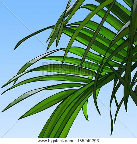 background of sky with green palm leaves