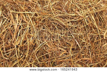 Hay texture closeup abstract a background photo
