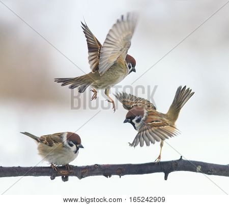 funny little birds flit and sit on a branch