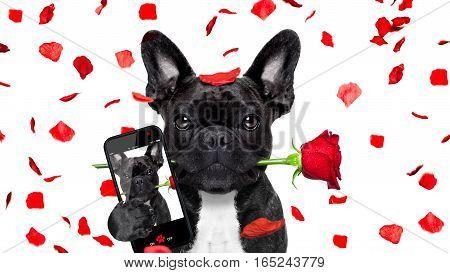 Valentines Dog Selfie In Love