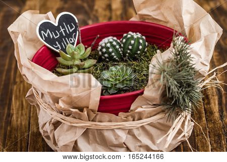 Miniature Succulent Plants In Red Pot On Wooden Background