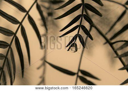 Foto de gota de agua caindo por folha de Árvore