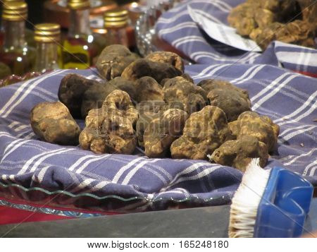 Group of italian expensive white truffles on the traditional canvas