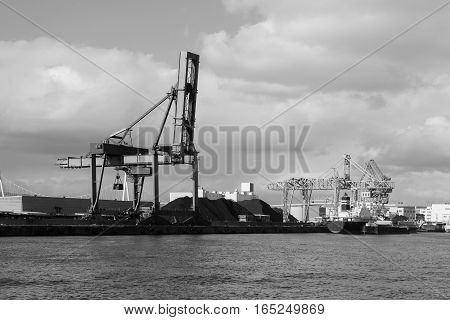 Back and White Red Cargo Cranes in Industrial Port
