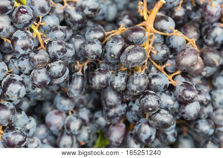 Black wine greape natural fresh fruit background