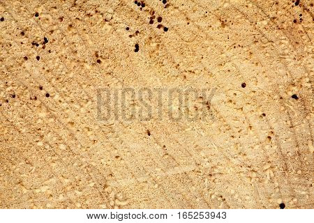 Cut old tree trunk with holes from woodworm. Light brown wooden background in rustic style.