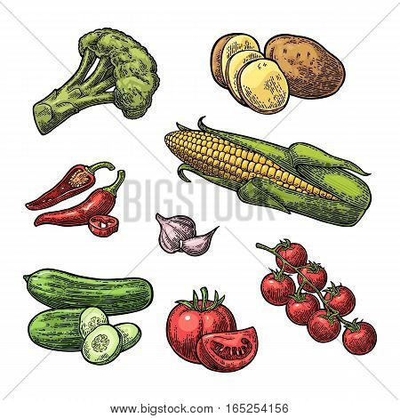 Set vegetables. Cucumbers, Garlic, Corn, Pepper, Broccoli, Potato and Tomato. Isolated on the white background. Vector color hand drawn vintage engraving illustration for poster, label and menu.