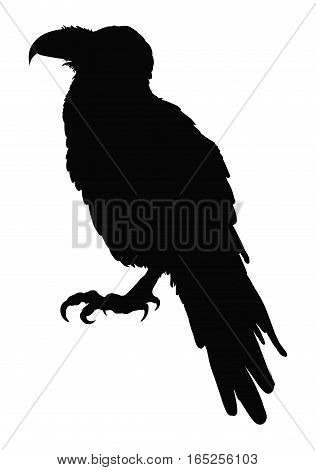 Decorative bird. Rook. Black and white drawing. Tattoo. Silhouette of a crow. Circuit birds