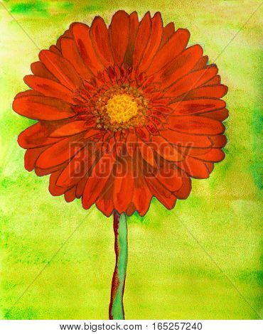 Red gerbera flower on yellow background watercolor painting.
