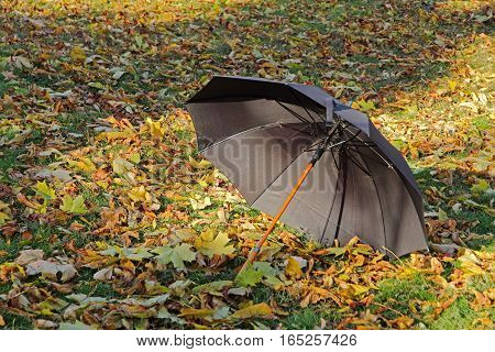 Black umbrella on golden foliage in autumn park.