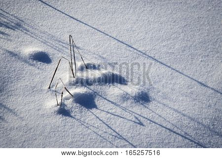 abstract seasonal background shadow in the snow a tussock