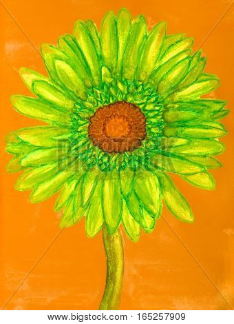 Green gerbera on orange background painting watercolor.