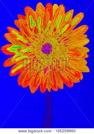Orange gervera flower on blue background painting in watercolours