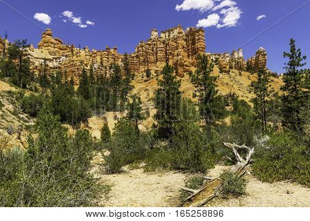 Red Canyon Wall in Bryce Canyon National Park Utah