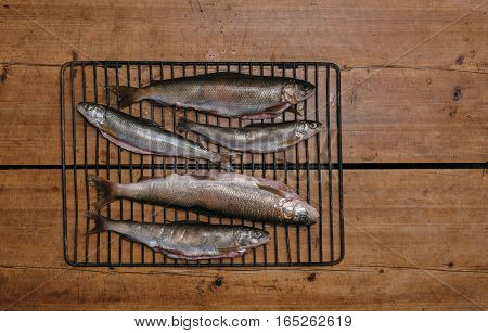 Fresh fish before cooking on the grill. It lies on a table in a fisherman's hut on the shore of Lake Baikal.