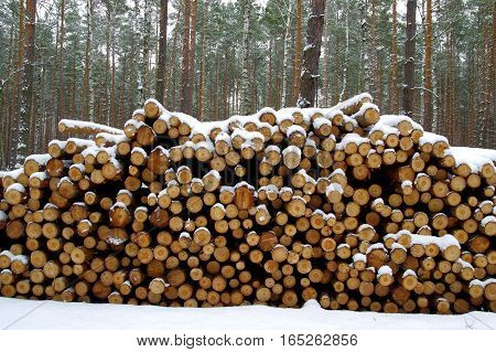 The photo shows logs felled pine wood. Composite wood is high heap. It's winter, the surface of the earth and wood cover layering of snow.